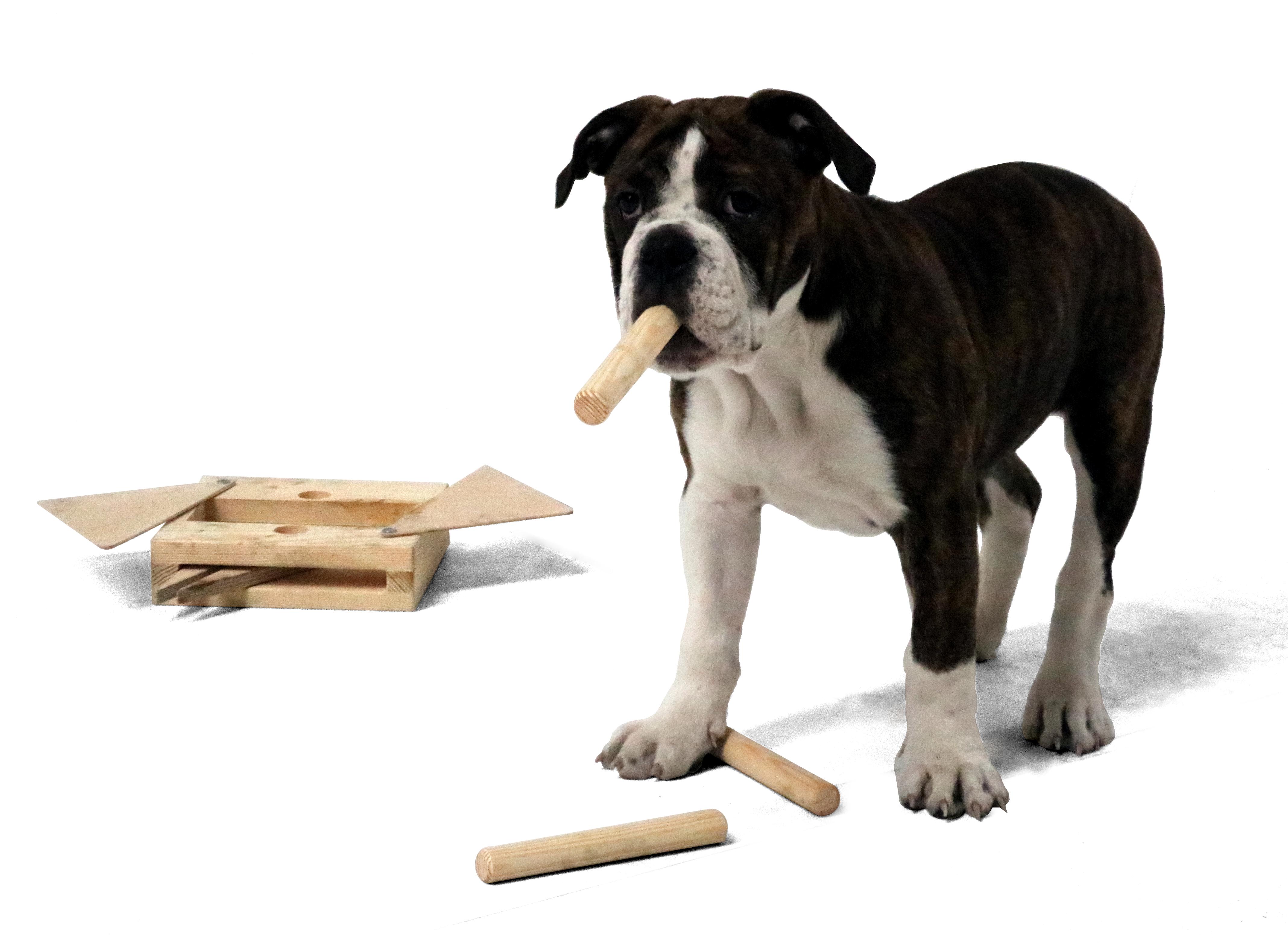 Hundespielzeug Multi, Intelligenz-Multi-Kombinationsspiel