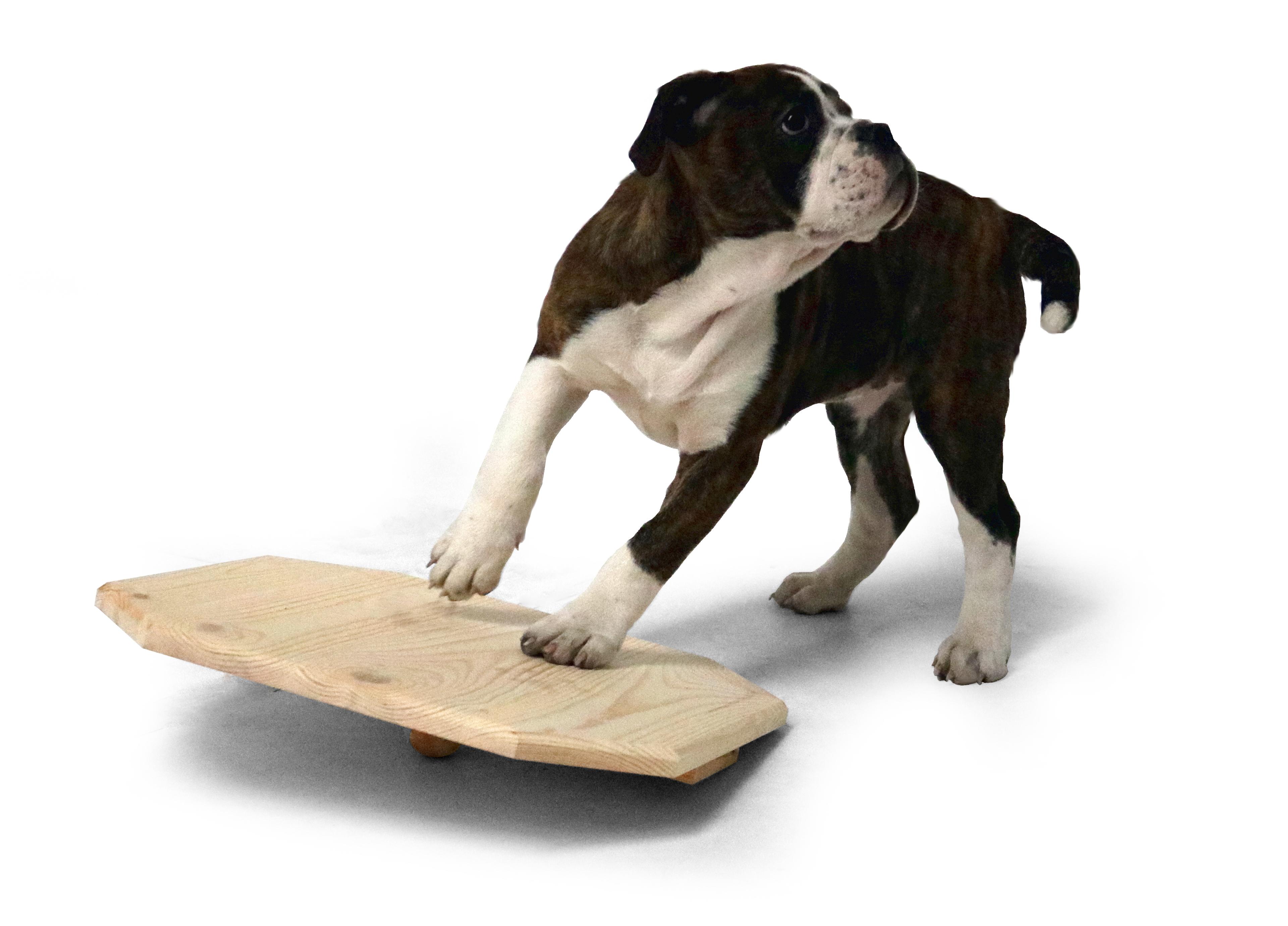 Welpen-Wackelbrett 40x40 cm aus Holz naturbelassen, Activity Motorik-Spielzeug für Hunde
